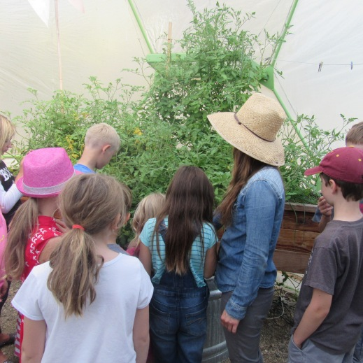 hydroponics-garden
