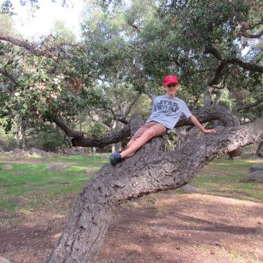rocky-nook-park-sport-tree
