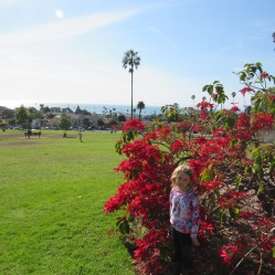 ventura-sarah-poinsettia-tree
