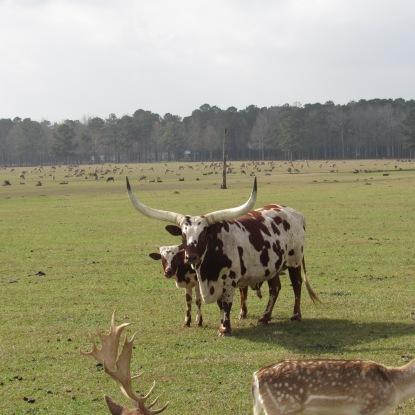 global-bulls