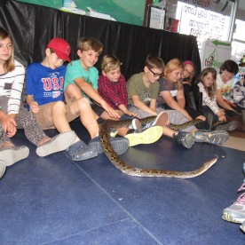 ecov-retic-python-sport