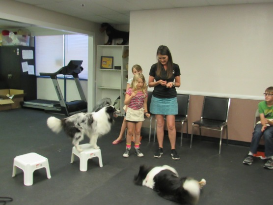 sarah training poised dogs