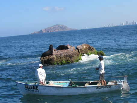 sea lion city view mazatlan