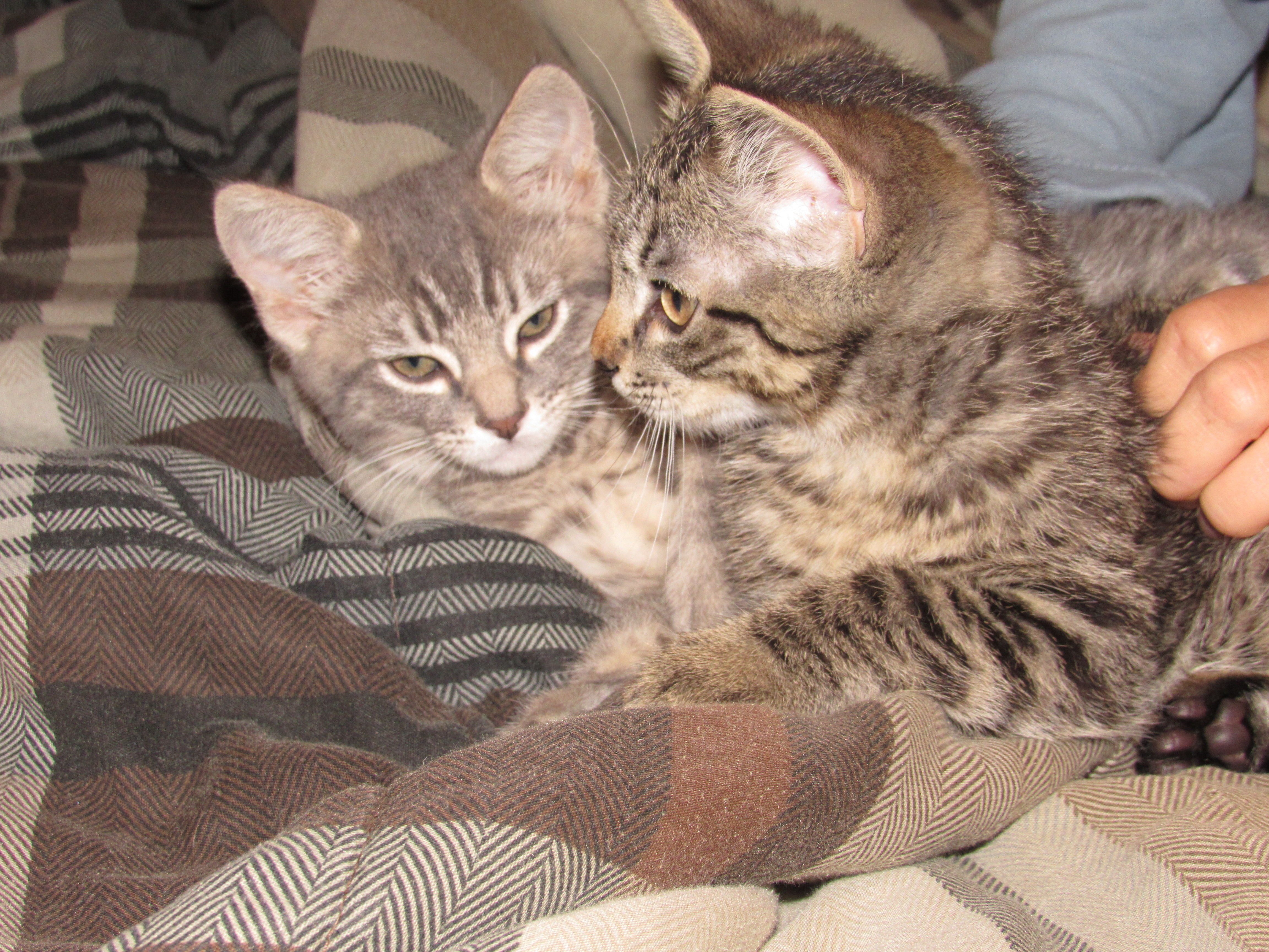 My Brand New Kittens Duke & Daisy (Cuteness Overload)